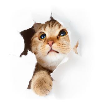 Katze macht Kuckuck