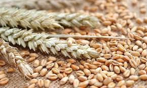 Spreu und Weizen